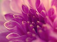 可爱精致花卉梦幻田园风景壁纸