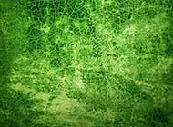 绿色调复古裂纹幻灯片背景图片