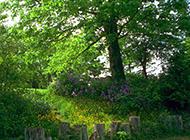 花园里的绿色大树摄影图片