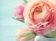 素雅清新风格瓶中玫瑰精美图片素材