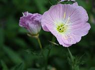 艳丽的野花摄影图片