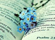 桌面壁纸唯美小清新花卉大图