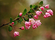 粉色樱花背景素材浪漫清新