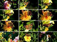 优雅清新的春日鲜花蝴蝶图片