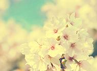 素雅清新粉色花卉唯美风景图
