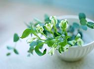 高清室内温馨唯美花朵桌面壁纸