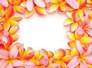 百合花瓣边框图片素材