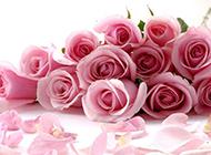 粉色浪漫玫瑰花束意境唯美壁纸