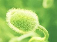 绿色小清新植物电脑桌面壁纸