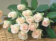 最新好看的玫瑰花图片素材