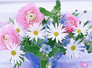 洋溢在花丛中的唯美桌面壁纸