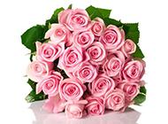 七夕玫瑰花图片粉色背景素材