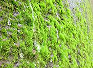 绿色植物苔藓原创摄影图片