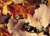 唯美秋天植物树叶图片素材