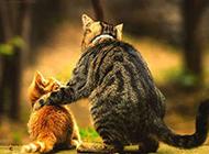 圆脸猫咪卖萌图片可爱欢乐