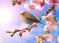 初春娇媚桃花美景图片欣赏