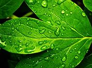 绿色叶子清新背景图片素材