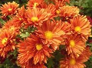 太阳花浪漫鲜花图片素材