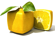 独特的方形橙子图片