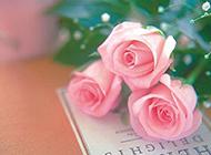 放在书本上的粉色玫瑰花图片