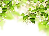 白色花的植物背景图片素材