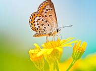 唯美自然清新花朵梦幻美景图片