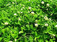 春色满园的唯美野花图片