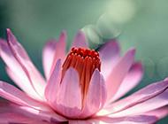 优雅紫色花朵高清特写图片素材