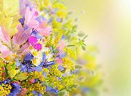 春天鲜花缤纷背景图片素材
