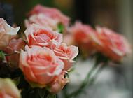治愈系唯美意境春日植物风景