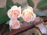 锁孔上的香槟玫瑰唯美图片