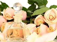 娇媚芳香的香槟玫瑰图片