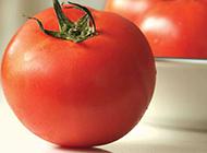 剔透可人的红番茄图片