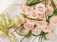 粉色玫瑰花摄影高清晰图片