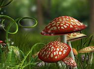 可爱的蘑菇桌面背景图片