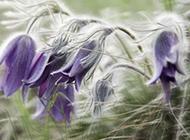春天鲜花图片娇柔素雅