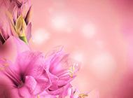唯美粉嫩花卉背景素材