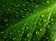 绿叶水滴背景素材清新素雅