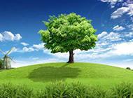 绿色植物背景图清新护眼