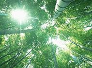 阳光照射下的竹子植物图片