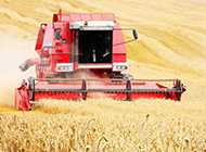 秋天里的植物图片 丰收的麦子