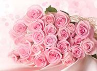 粉色玫瑰花的图片高清特写