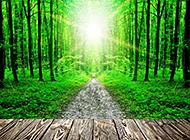 木板和绿色树林风景图片欣赏