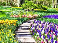 公园里好看的花海风景图片