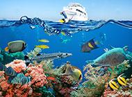 美不胜收的海底世界风景图片
