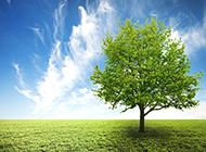 绿色唯美的大树风景图片