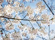 美丽的公园花朵风景图片