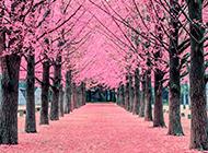 不同季节树林景色的图片欣赏