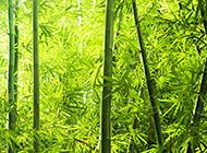 超高清的园林竹子风景图片