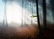 梦幻的大自然森林风景图片